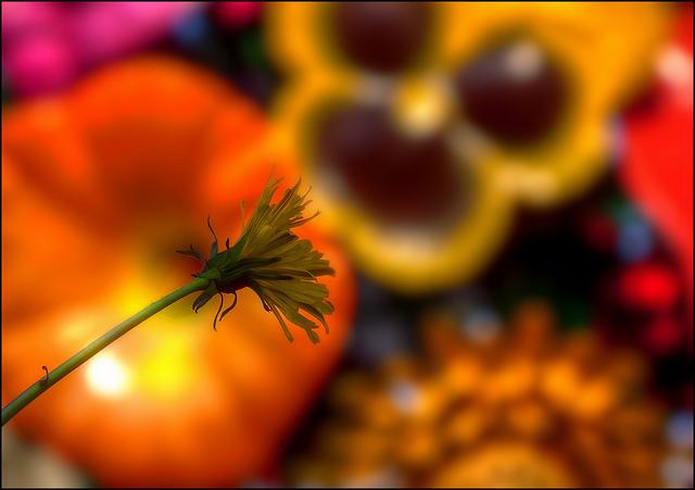 Photo de Flower Tree, place Antonin Poncet, Lyon